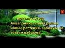 Краткий обзор-Аквапоника/Новые рыбки/новые растения