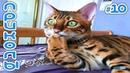 Смешные кошки 2019, приколы с котами до слез - Смешные коты и другие животные 10