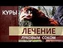 ВАЖНО! ЗАБОЛЕЛА КУРИЦА несушка -100% ЛЕЧЕНИЕ луковым соком кур в домашнем хозяйстве на своём участке