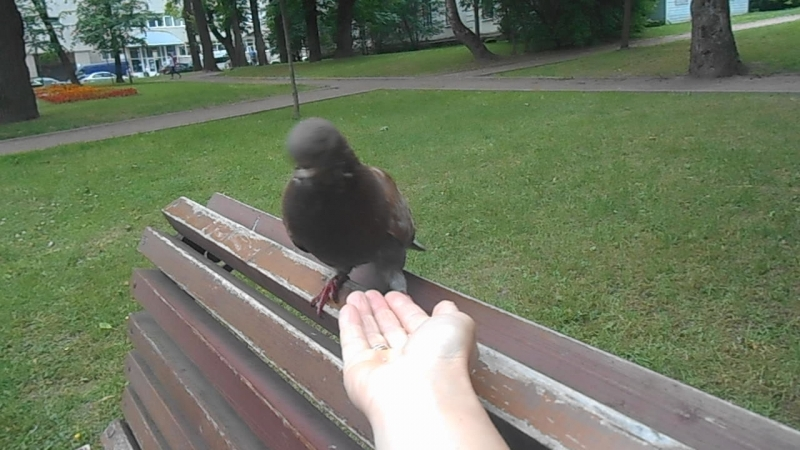 а я тебя всё таки приручу будешь у меня ручная голубка