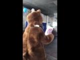 В Бурятии на выборах проголосовал медведь