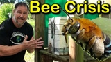 Why We Got Rid Of Our Bees Honey Bee Crisis!