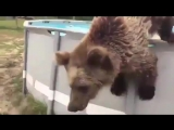 640x360 The Invisible Man в Твиттере #heatwave Just a bear playing in our swimming pool....
