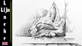 Sleepy KITTEN drawing Graphite Pencil Step by Step for beginners