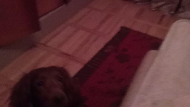 собака и ее игрушки 2