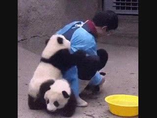 Похоже, я нашёл идеальную работу протиратель панд
