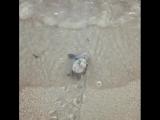 Морская черепашка карета карета острова Кефалония