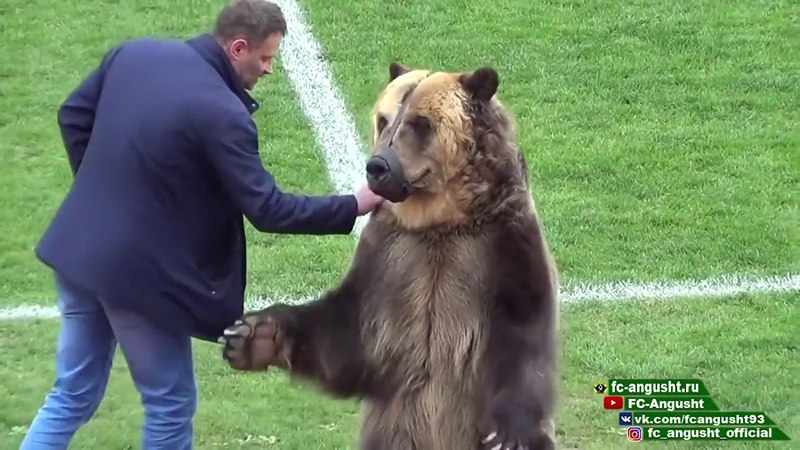 Медведь Тима открыл матч ПФЛ в Пятигорске
