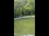 Старая Гагра. Приморский парк