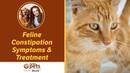 Симптомы и лечение запоров у кошек / Feline Constipation Symptoms Treatment