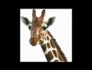 Детская песенка про Жирафа_ Песни Железновых с движениями
