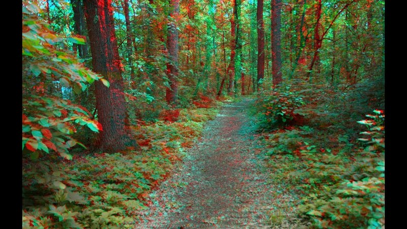Forest Roads 3D Joys of Spring 3D Anaglyph Super 3d video