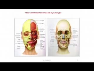 С чего начинать эстетическую коррекцию космметологу?