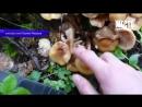 Сводка Три человека поели грибов и погибли 20 09 2018