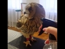 Юмор Humor смешные короткие видео lustige Videos Eule сова