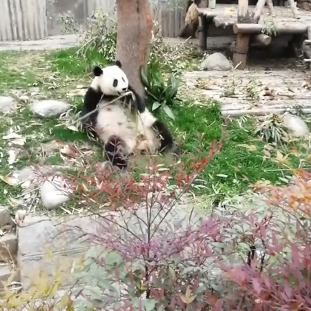 "9GAG: Go Fun The World on Instagram: ""Shifu taught you well...But he didn't teach you everything. - panda kungfupanda 9gag dragonwarrior"""