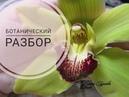 Орхидея Цимбидиум Разбор цветка Видеоразбор цветов от Елены Гуреевой