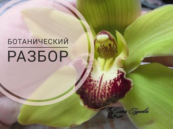 Орхидея Цимбидиум..Разбор цветка.Видеоразбор цветов от Елены Гуреевой.