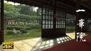 4K 一華院 京都の庭園 IKKA IN 4K The Garden of Kyoto Japan