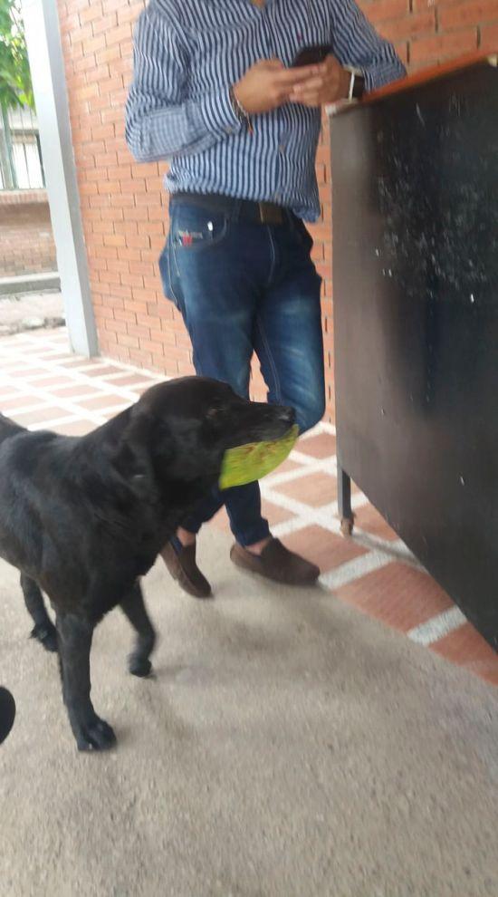 Умный пес понял суть товарно-денежных отношений