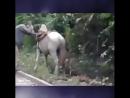 Да кто то не дождётся своего принца на белом коне