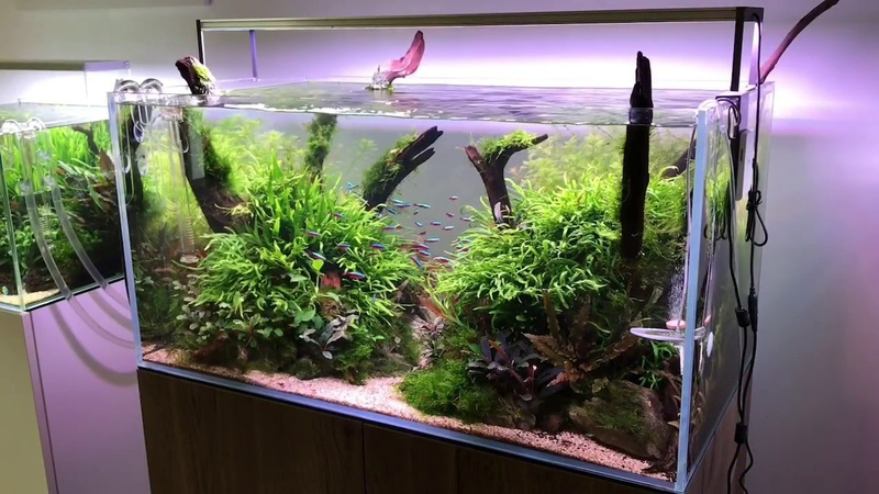 90cm Aquascape Layout Concave Composition with Riverwood