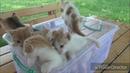 Suara Anak Kucing lucu imut Dan Cerdik