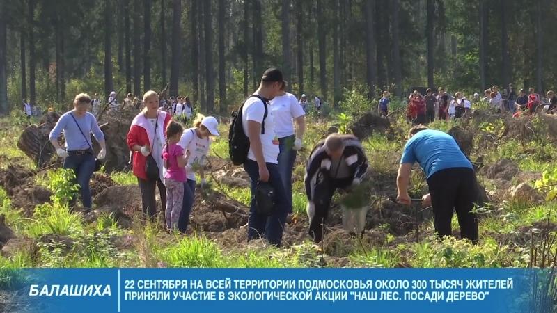 «Наш лес. Посади своё дерево» в Балашихе