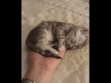Когда котенок уснул на ладошке