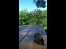 синичка съела жука