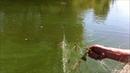 Воронежский заповедник Незаконный лов рыбы в охранной зоне