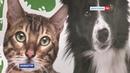 Продолжается программа по регулированию численности бродячих собак