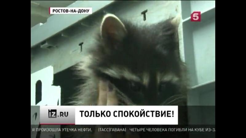 В Ростове-на-Дону нервных пациентов ветеринарной клиники усп