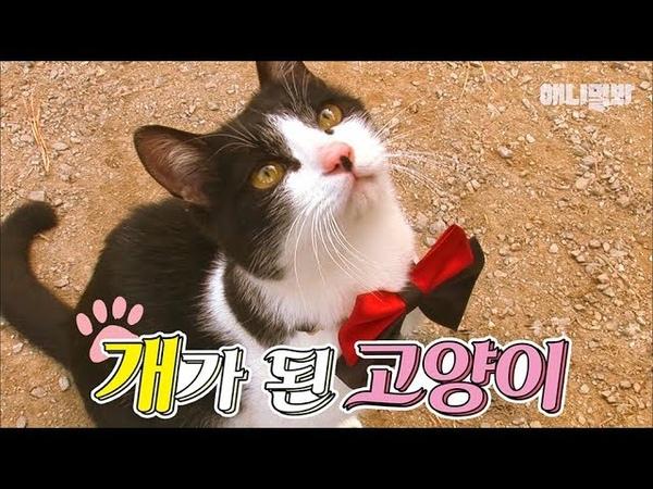 개냥이를 넘어 개가 된 고양이 / 개밥 먹고 도그 어질리티까지 | SBS 동물농장x애457