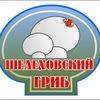 Шелеховский гриб