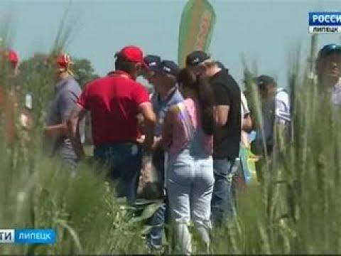 Сегодня в Липецкой области начинается Всероссийский агрофорум День поля Вести 24