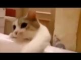 Кошка думает, что хозяйка тонет в ванной Ее реакция покорила Интернет