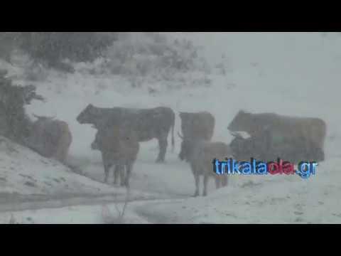 Χιονόπτωση πυκνή το πρώτο χιόνι στα Περτουλιώτι 9