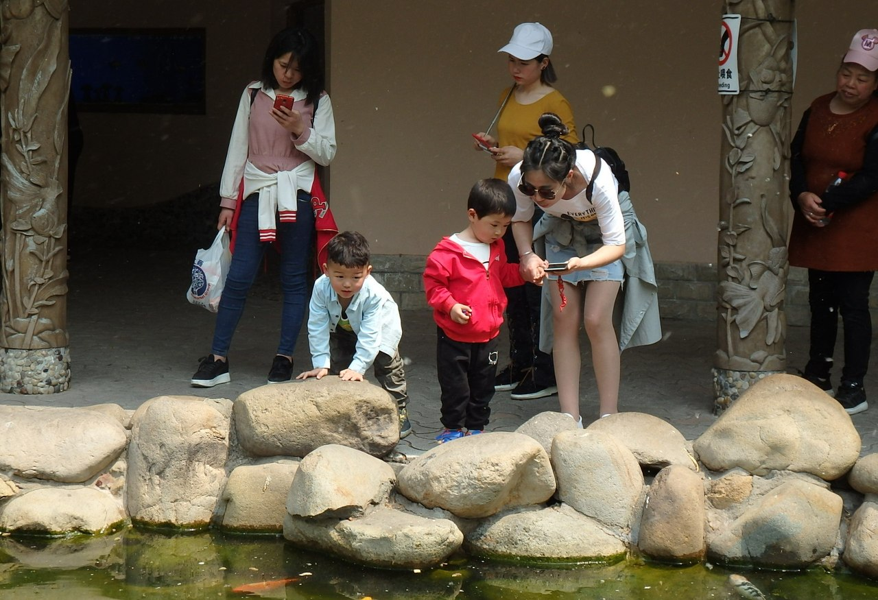 One day in Shanghai Zoo is very, big, a zoo, live, here, animals, Zoo, watch, only, flowers, crocodiles, exotic, Pandas, panda, Malaya, iguanas, China, Special, popular, rare