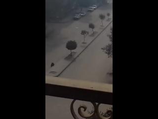 Египтяне набросились на городского стрелка ИГИЛ. Выглядит как нападение зомби в фильме