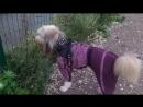 Пёс Тотоша - ничего хорошего