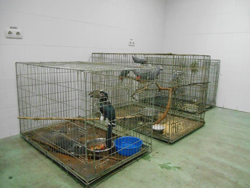 Информация для тех, кто интересуется судьбой животных после пожара в Черкасской зоопарке