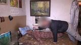 Правоохранители раскрыли убийство в Макеевке