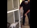 Кот живет лучше чем ты (VIDEO ВАРЕНЬЕ)