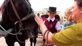 Девочка кормит лошадь Лолиту.