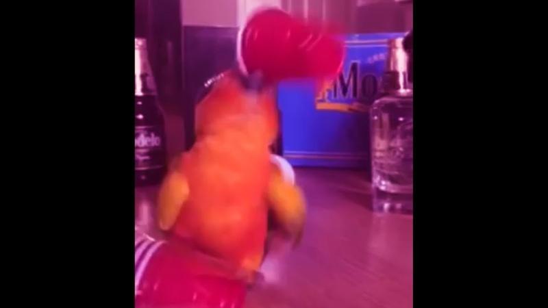 My bird will never die