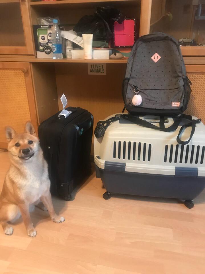 Вещи для поездки с собакой в поезде