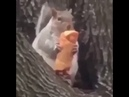 Cocksucking brooklyn squirrel steals eggroll and tells man to fuggetaboudit