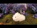 Jo Malone Wild Bluebell _ Джо Малон Вайлд Блюбелл реклама духов [720p]