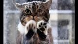 Кошка пришла к людям просить о помощи, в снегу замерзали ее котята